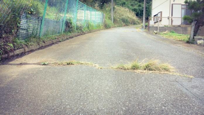 雑草の生えた道路